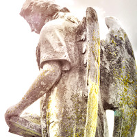 ANGELS IN STONE
